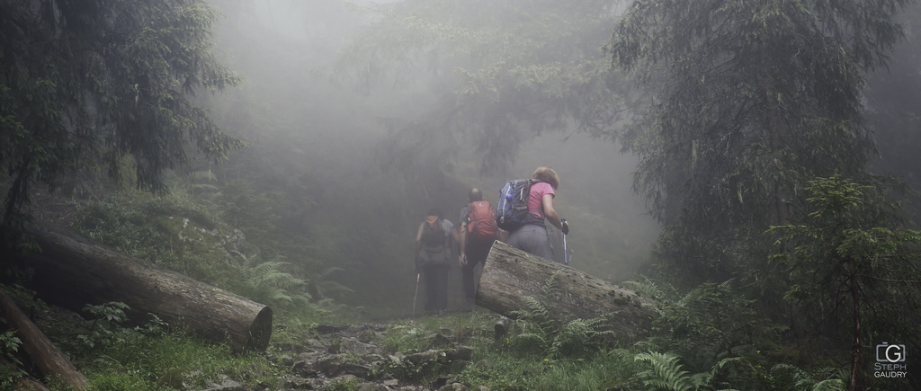 Mist expedition 2015