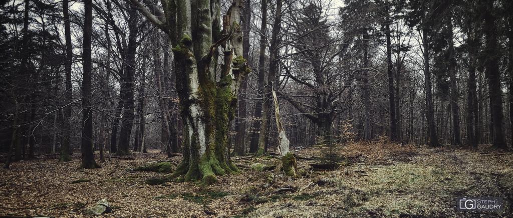 Spa, entre les bois de la Picherotte et Berinzenne