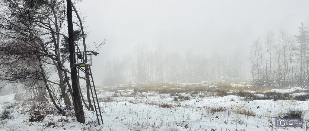 Brouillard dans les bois de Xhoris