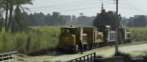 Le train des récoltes de papyrus