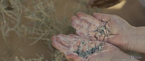 Le savon du désert mousse avec un peu d'eau