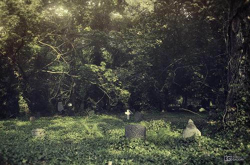 Les mauvaises herbes des cimetières