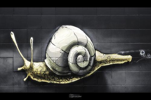 L'escargot fait le mur...