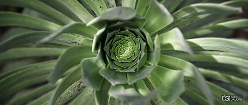 Vortex végétal