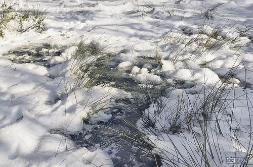 Tourbière gelée dans les Fagnes