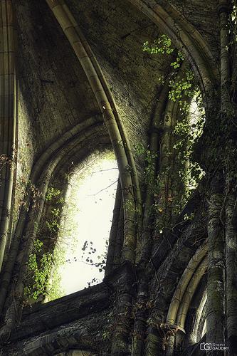 Abbaye de Villers: Lumière divine