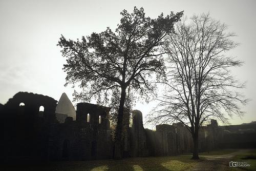 Abbaye de Villers: le cellier en contre-jour