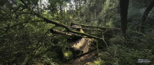 Tank abandonné dans la forêt
