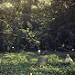 Thumb Les mauvaises herbes des cimetières