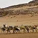 Miniature Marche en avant de toi-même, comme le chameau qui guide la caravane.