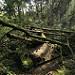 Miniature Tank abandonné dans la forêt