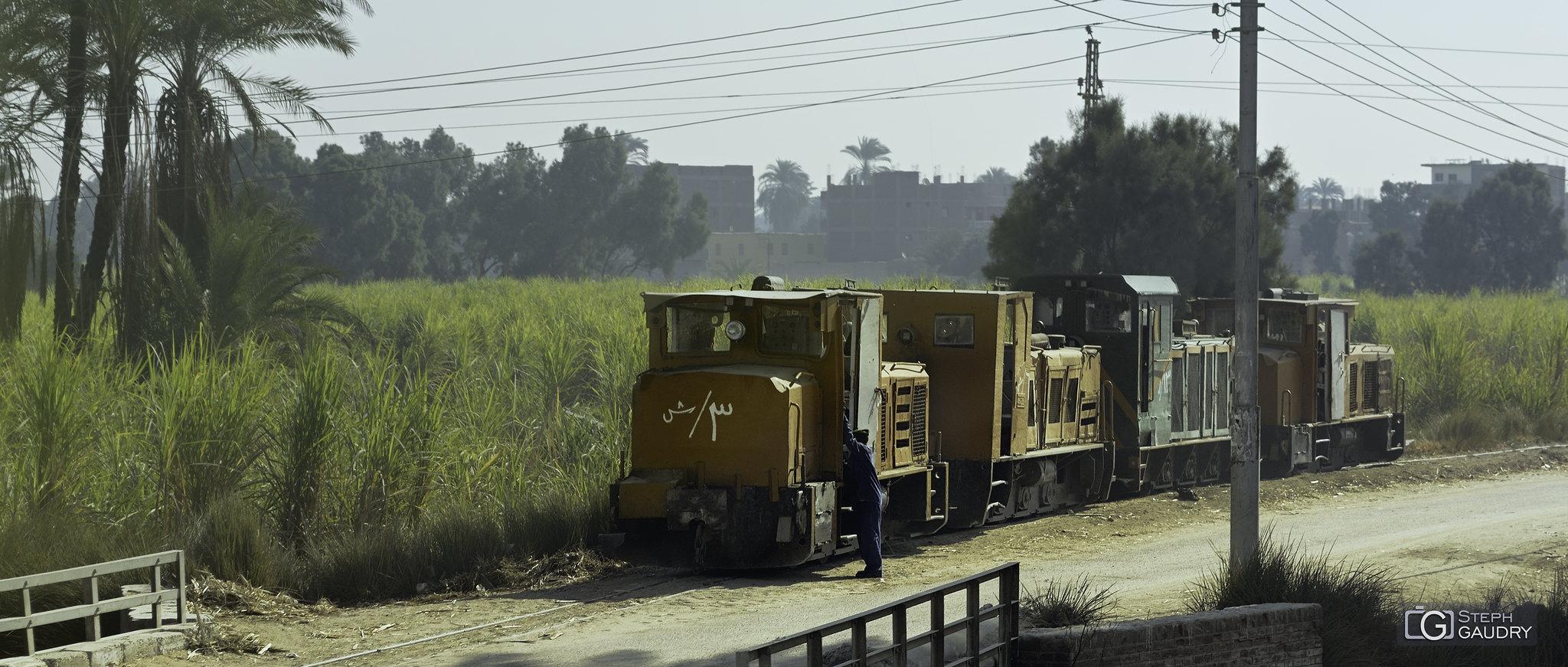 Le train des récoltes de papyrus [Klik om de diavoorstelling te starten]