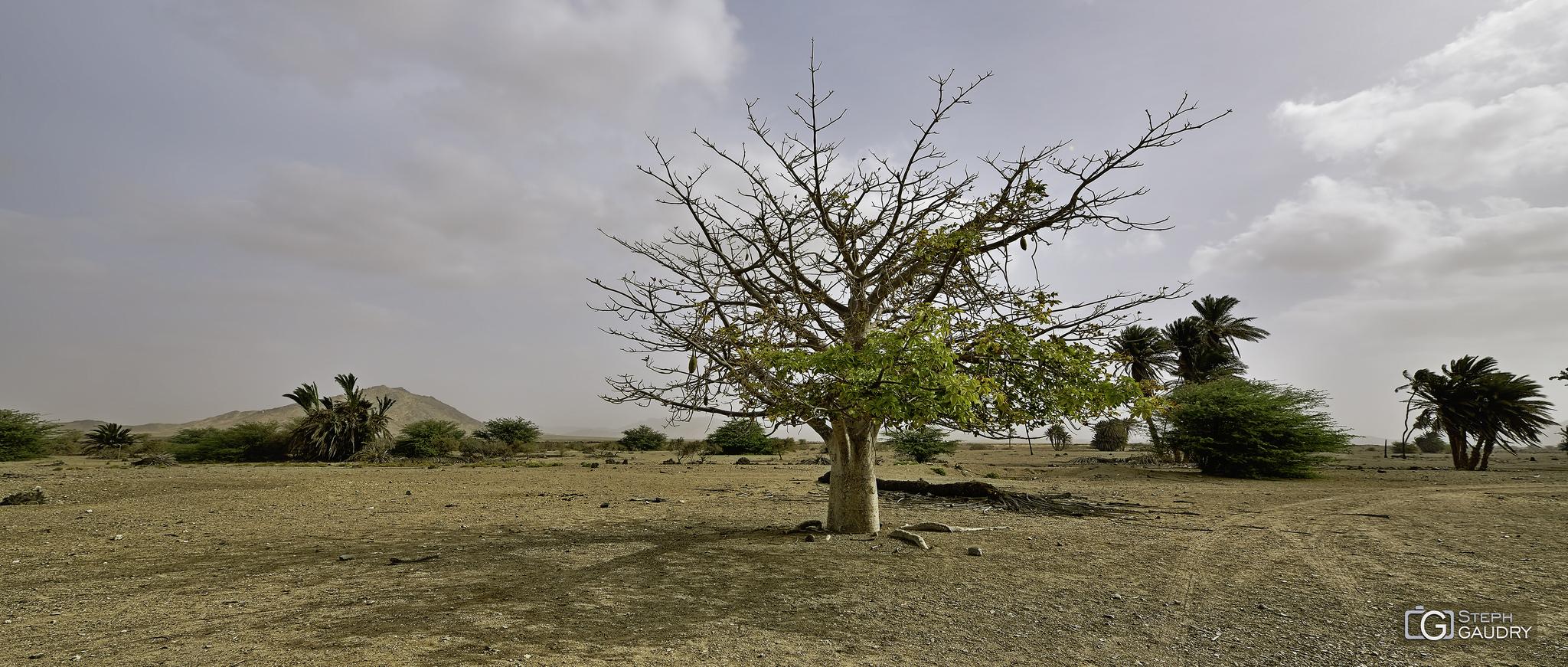 Baobab devant le Monte Estância [Cliquez pour lancer le diaporama]