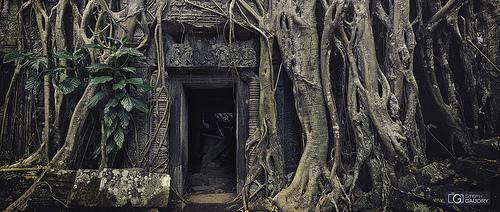 Temple de Ta Prohm sous les racines de fromager
