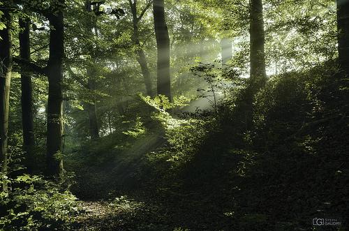 Rayon de soleil dans le brouillard