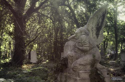 F Cemetery (HUN) - looking around the light