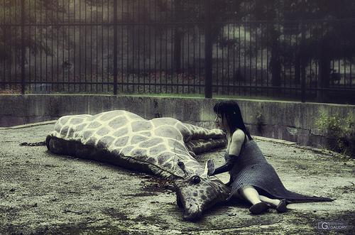 La fille à la girafe - l'adieu