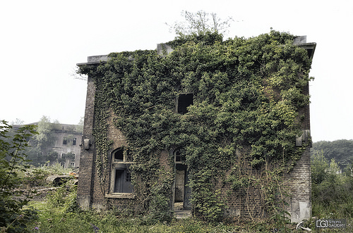 La maison au lierre