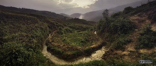 Méandre dans les rizières