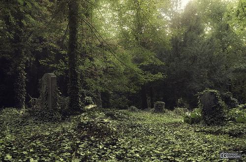 Lierre et tombes dans un cimetière oublié