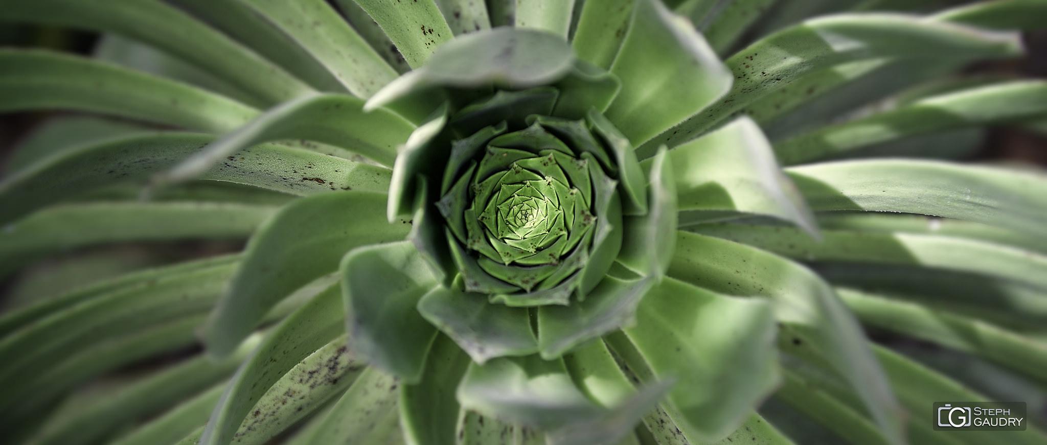 Vortex végétal [Click to start slideshow]
