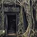 Thumb Temple de Ta Prohm sous les racines de fromager