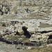 Miniature Photo suivante: Le cromlech de Mad Max