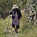 Miniature Vaillante habitante de Taganana