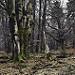Thumb Spa, entre les bois de la Picherotte et Berinzenne