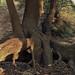 Thumb Les bois de la Chartreuse - coucher de soleil sur les racines