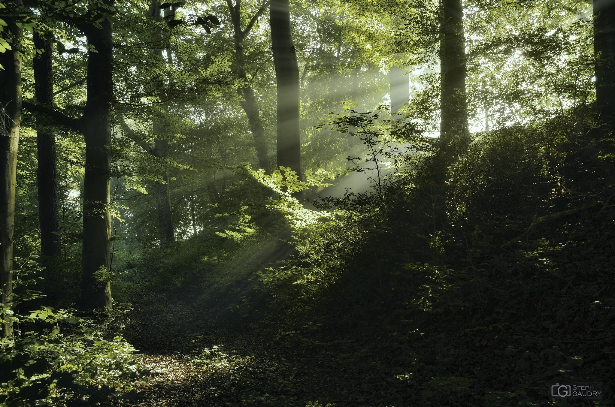 Rayon de soleil dans le brouillard [Cliquez pour lancer le diaporama]