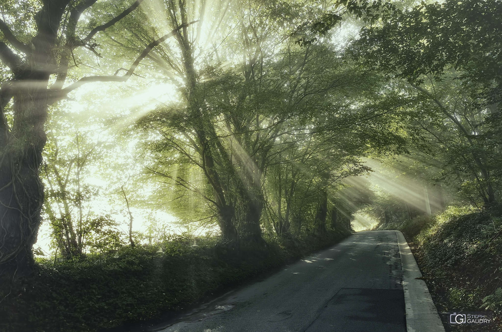 Brume matinale près de la roche aux faucons... [Klik om de diavoorstelling te starten]