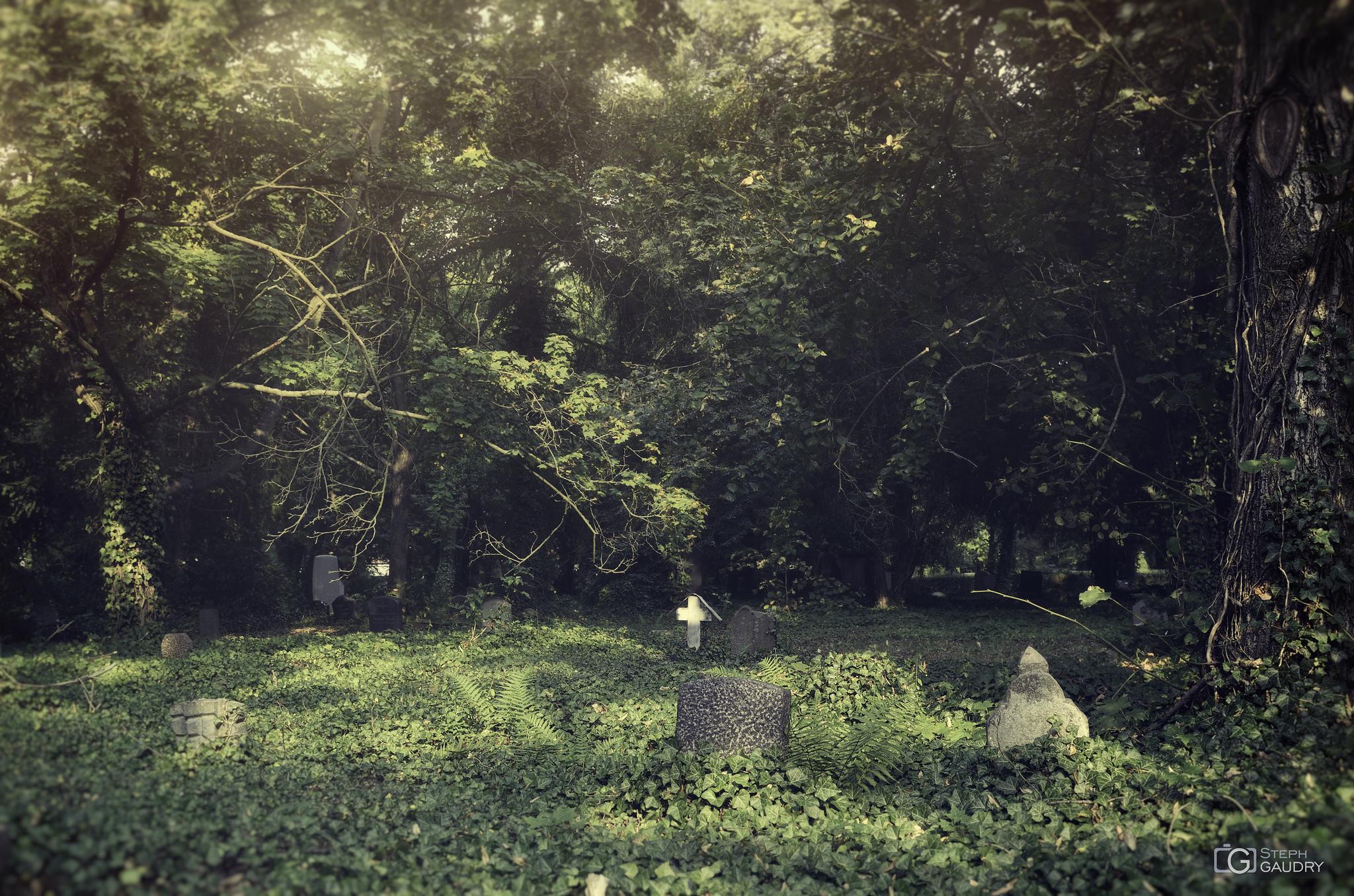 Les mauvaises herbes des cimetières [Klik om de diavoorstelling te starten]