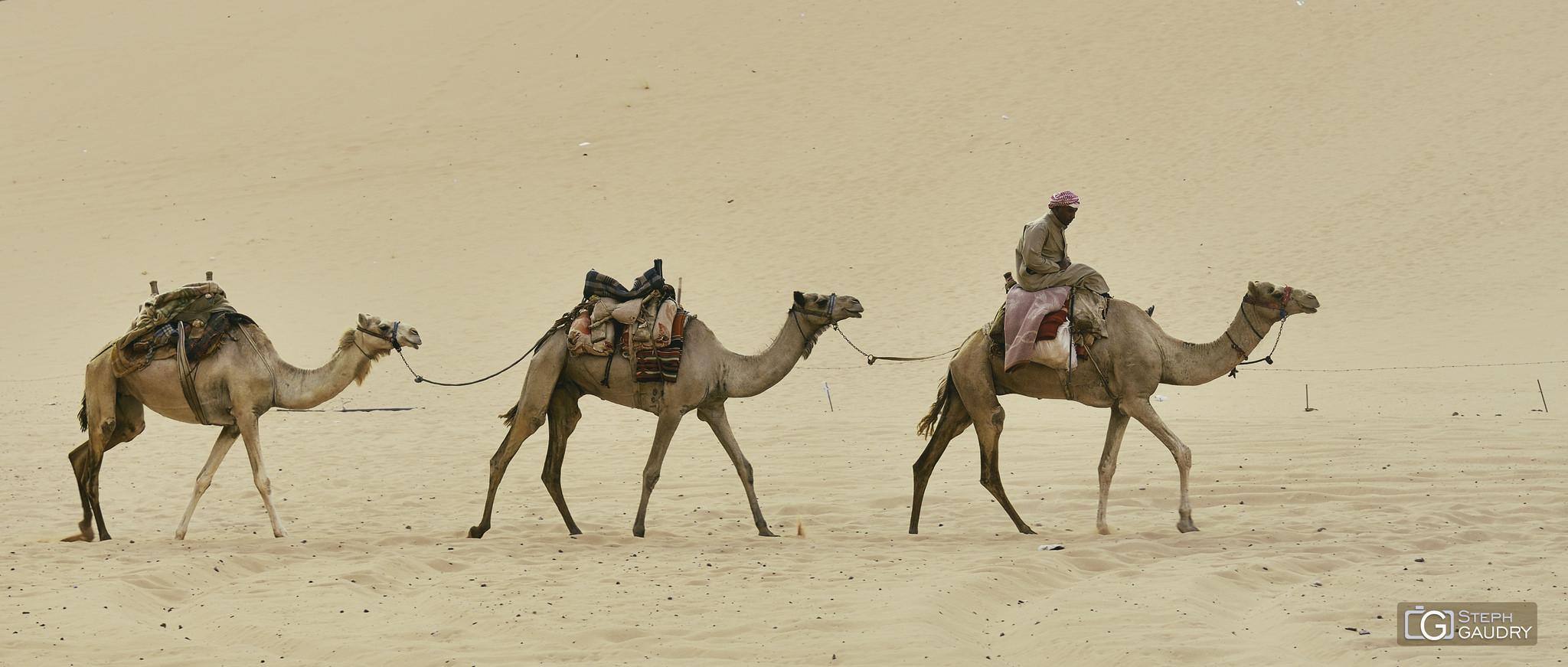 L'hirondelle ne fait pas le printemps, mais le chameau fait le désert. [Cliquez pour lancer le diaporama]