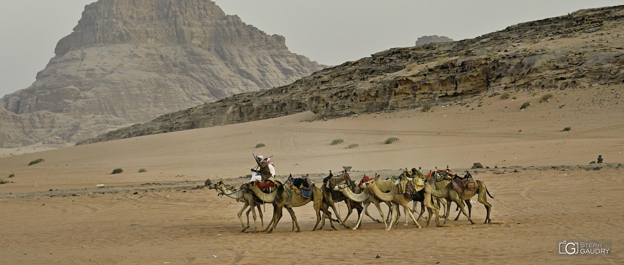Le retour de la caravane le soir dans le Wadi-Rum... [Cliquez pour lancer le diaporama]