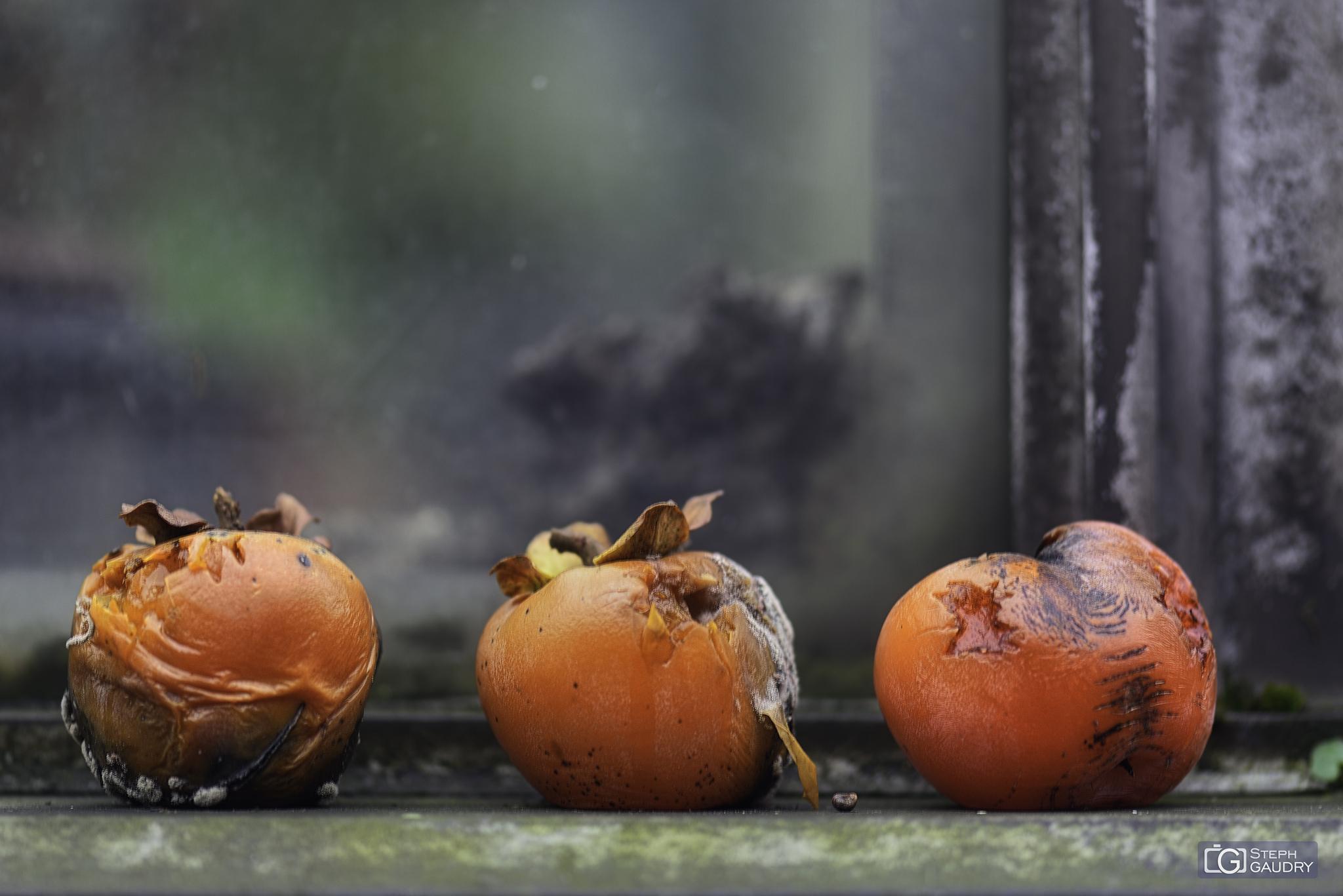 Les trois belles tomates colorées [Cliquez pour lancer le diaporama]