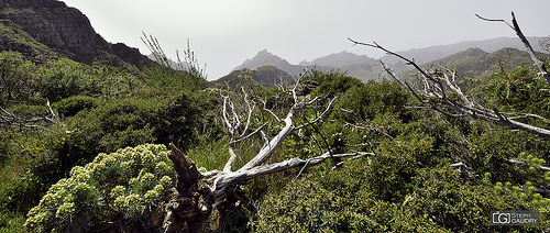 Barranco de Masca