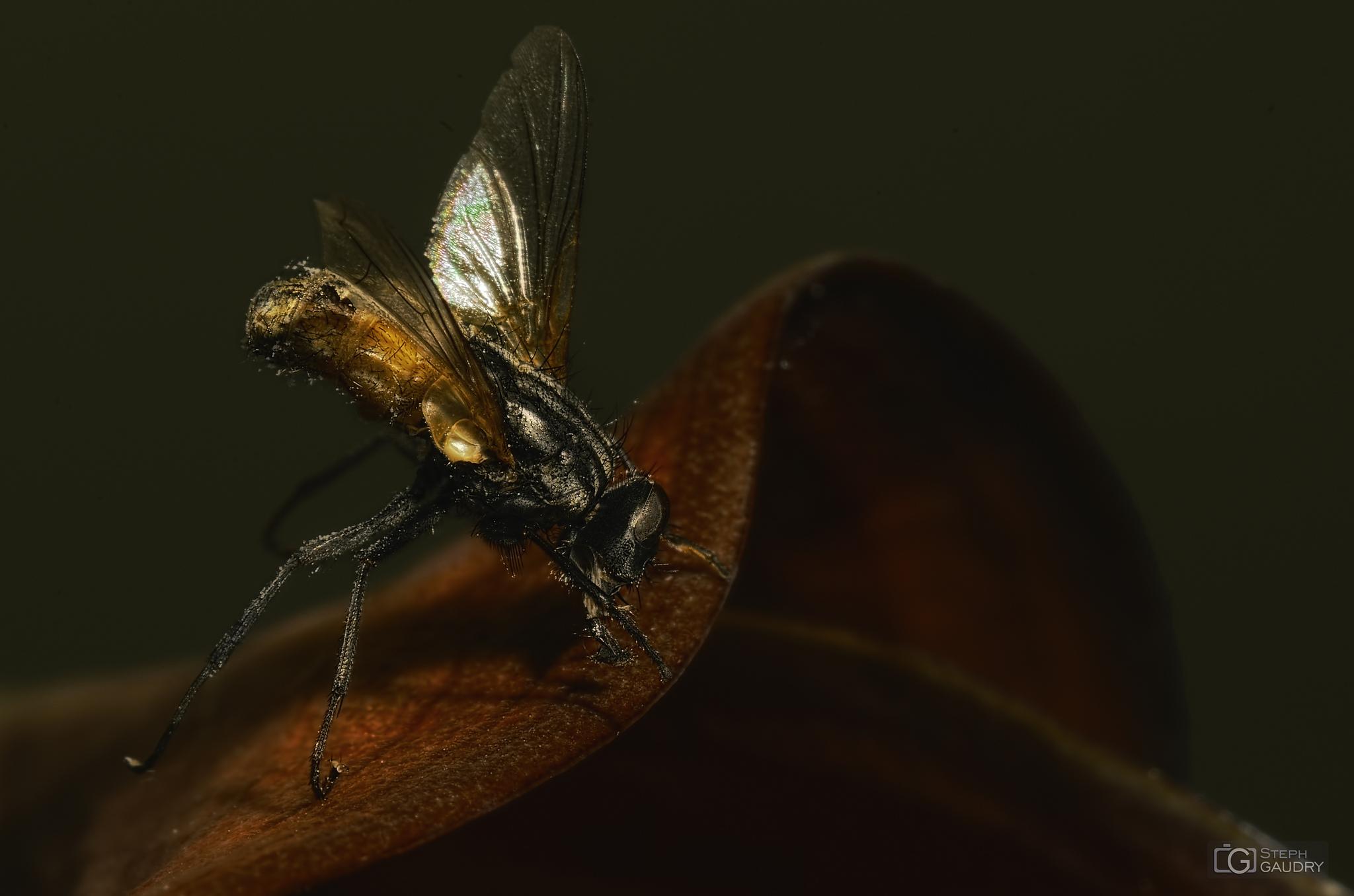 Dead insect on a living flower [Cliquez pour lancer le diaporama]