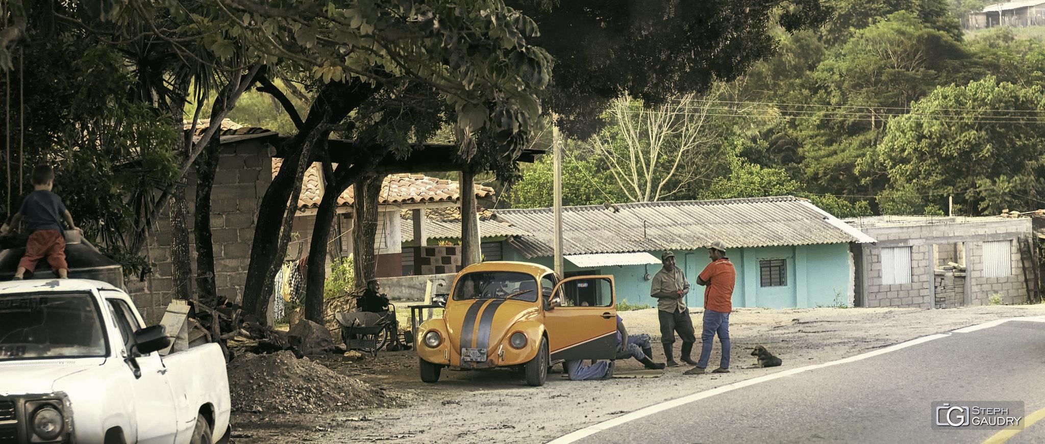 Coccinelle orange le long de la route de Desplayado (MEX) [Klik om de diavoorstelling te starten]