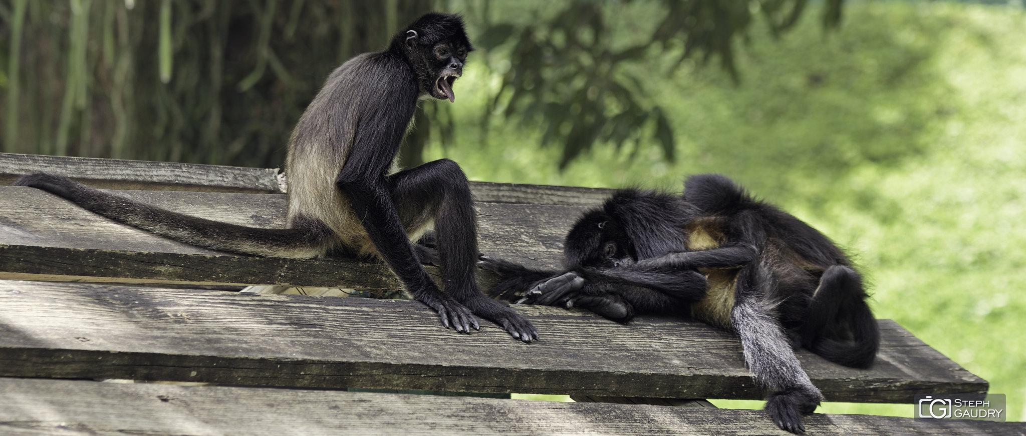 Le singe et le travail [Cliquez pour lancer le diaporama]