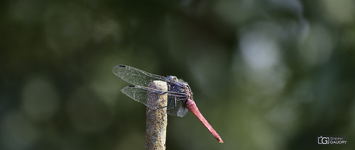 Dragonfly - 2018_04_22_152730