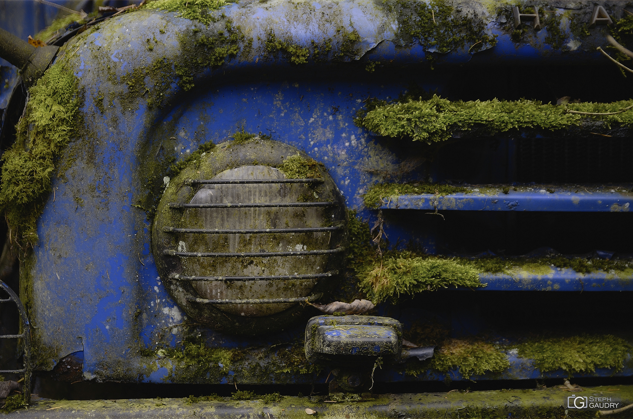Monstroplante bleu [Click to start slideshow]