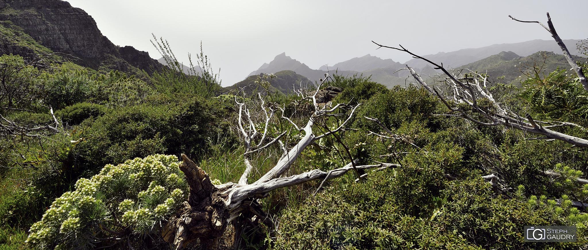 Barranco de Masca [Cliquez pour lancer le diaporama]