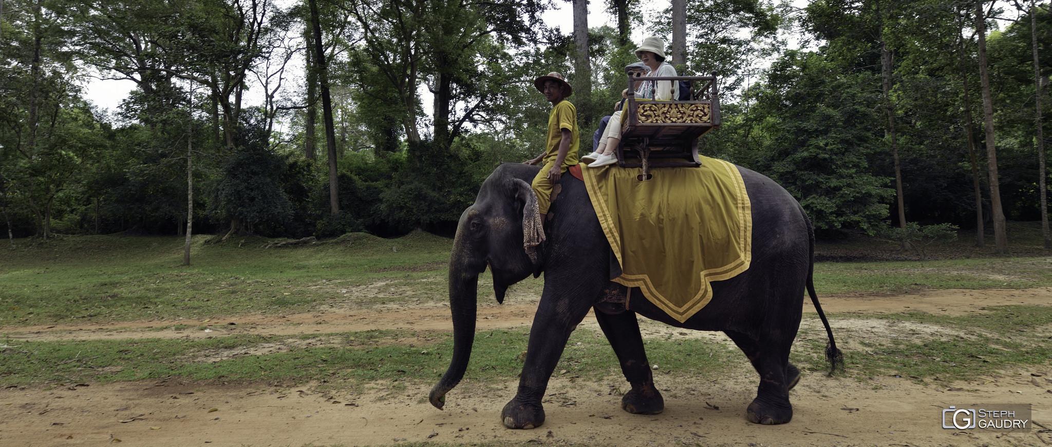 Eléphant au Cambodge