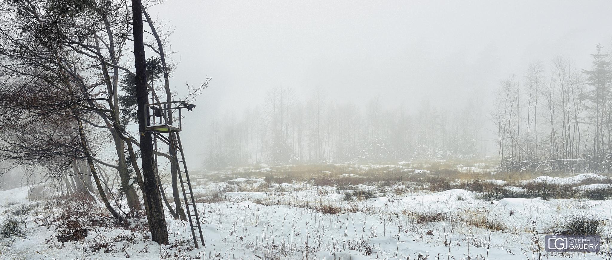 Brouillard dans les bois de Xhoris [Cliquez pour lancer le diaporama]