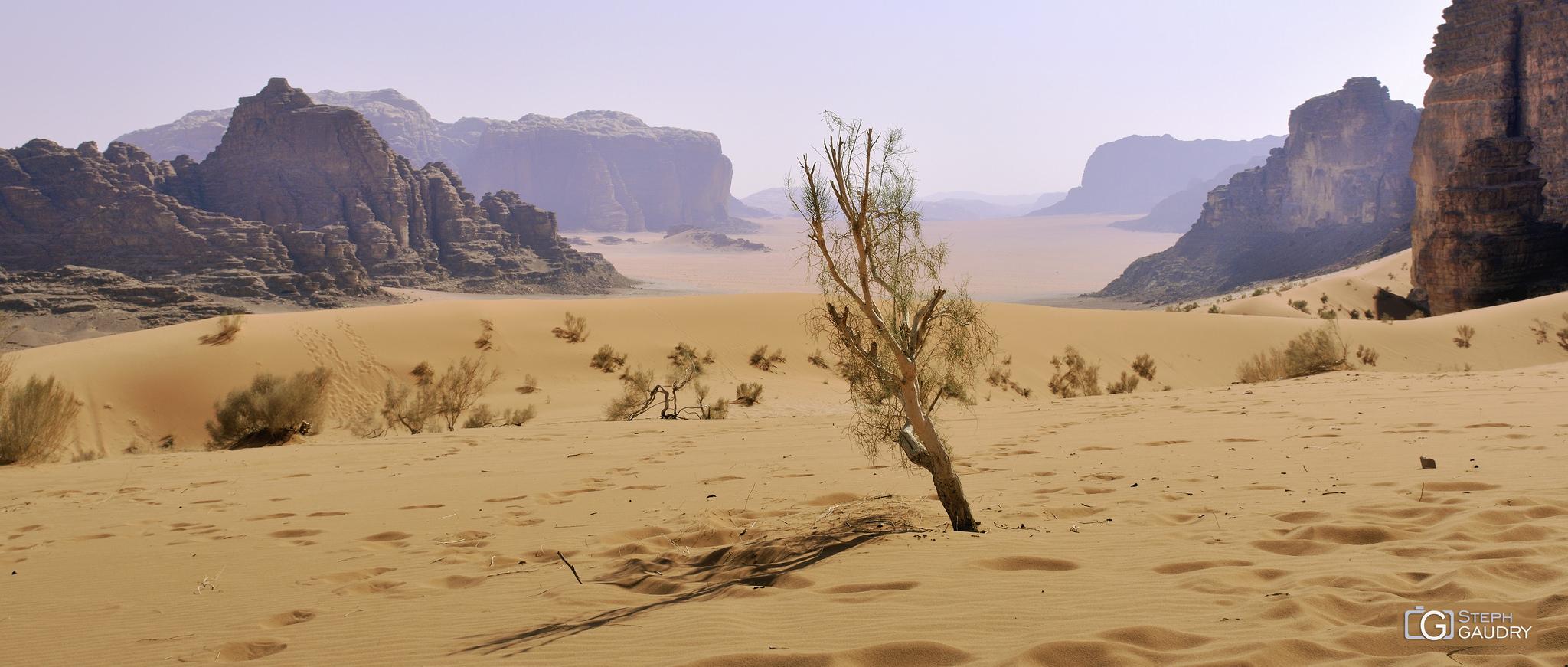 Wadi Rum desert (JOR) [Cliquez pour lancer le diaporama]