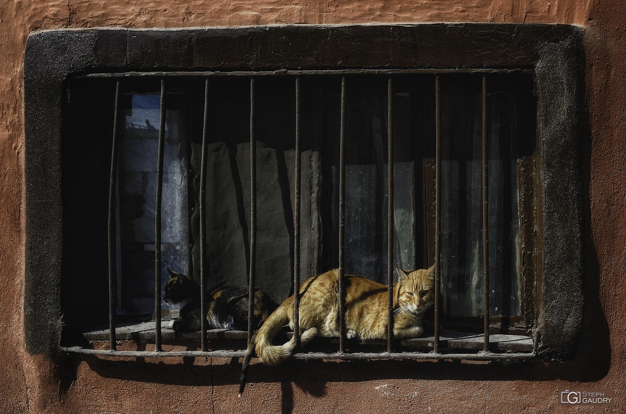 Turkish jail [Cliquez pour lancer le diaporama]