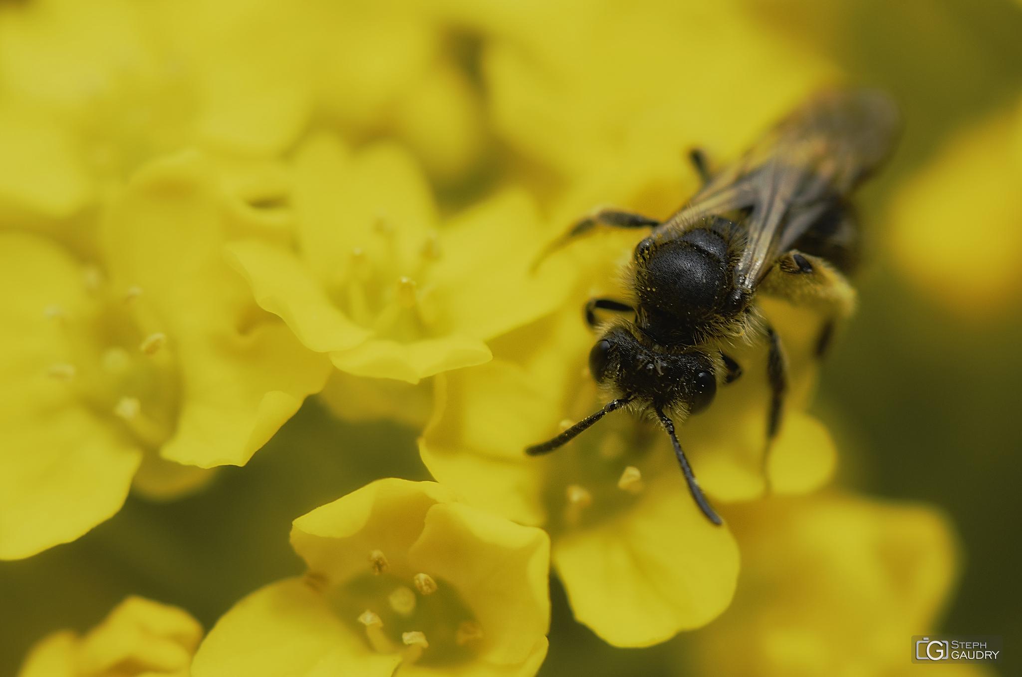Macro tentative 2 - insect [Klik om de diavoorstelling te starten]
