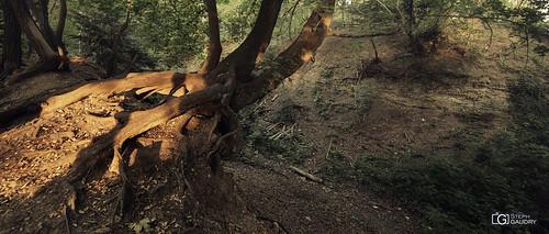 Anciens fossés de la Chartreuse