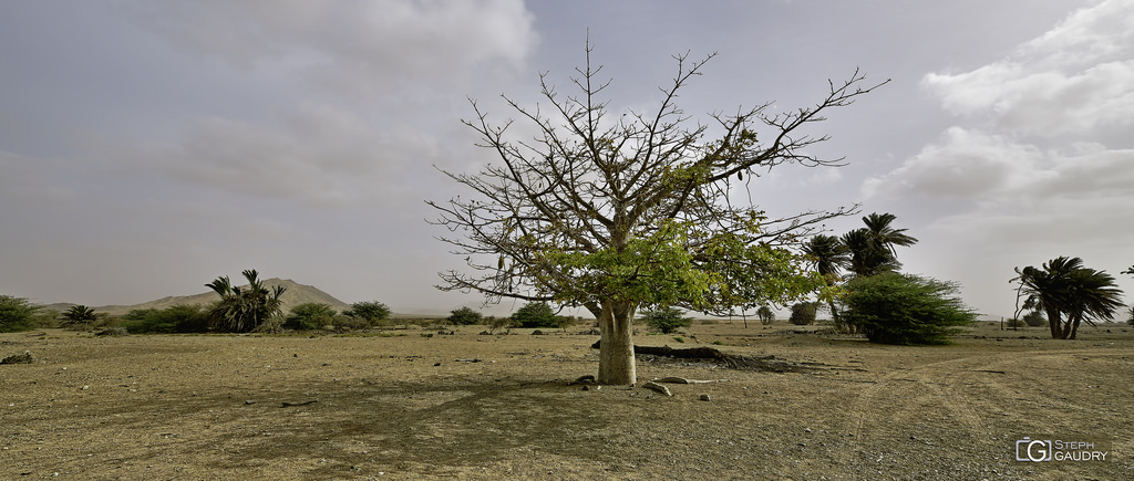 Baobab devant le Monte Estância